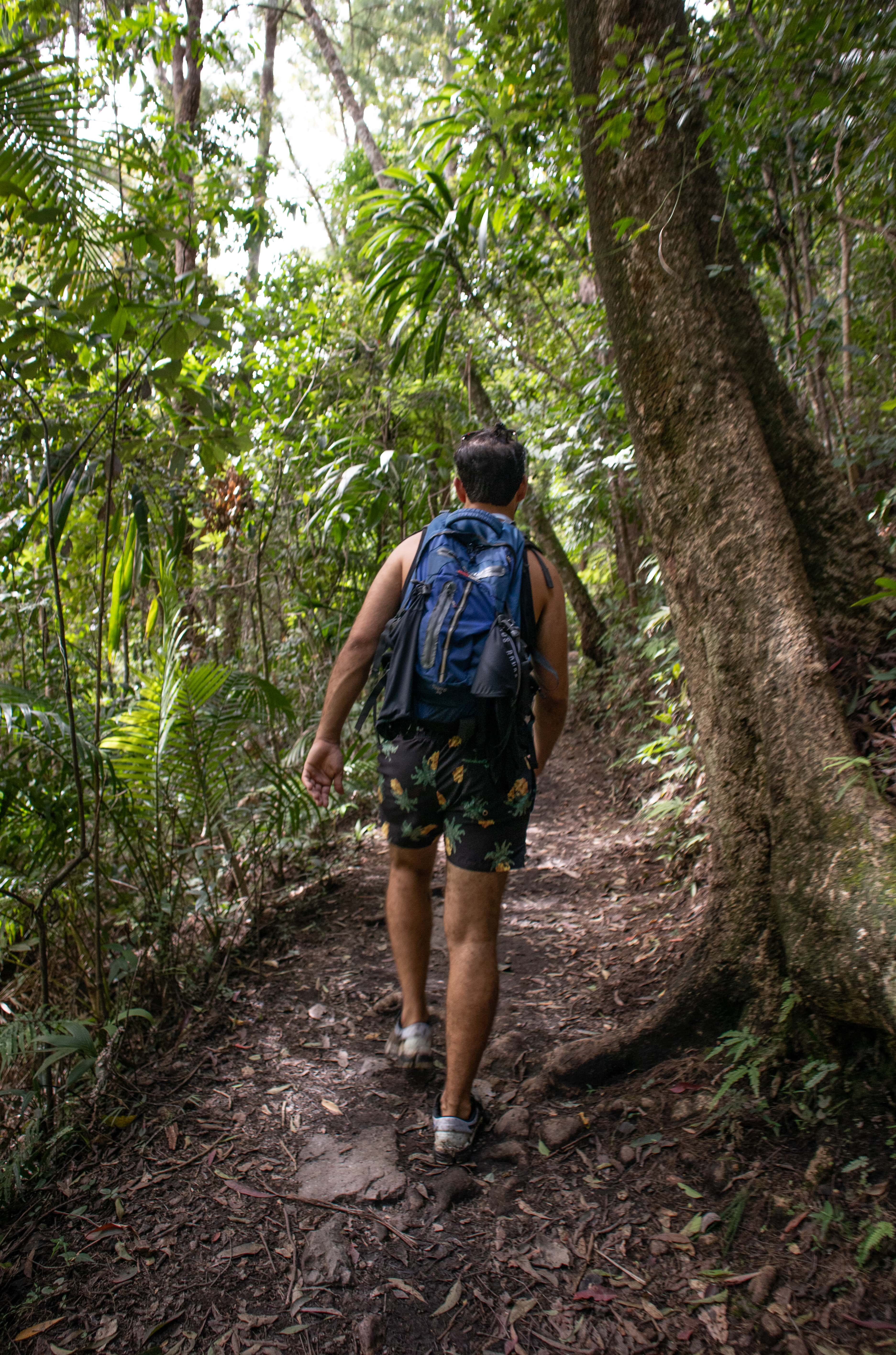 Man carrying a backpack walking on a trail through the rainforest