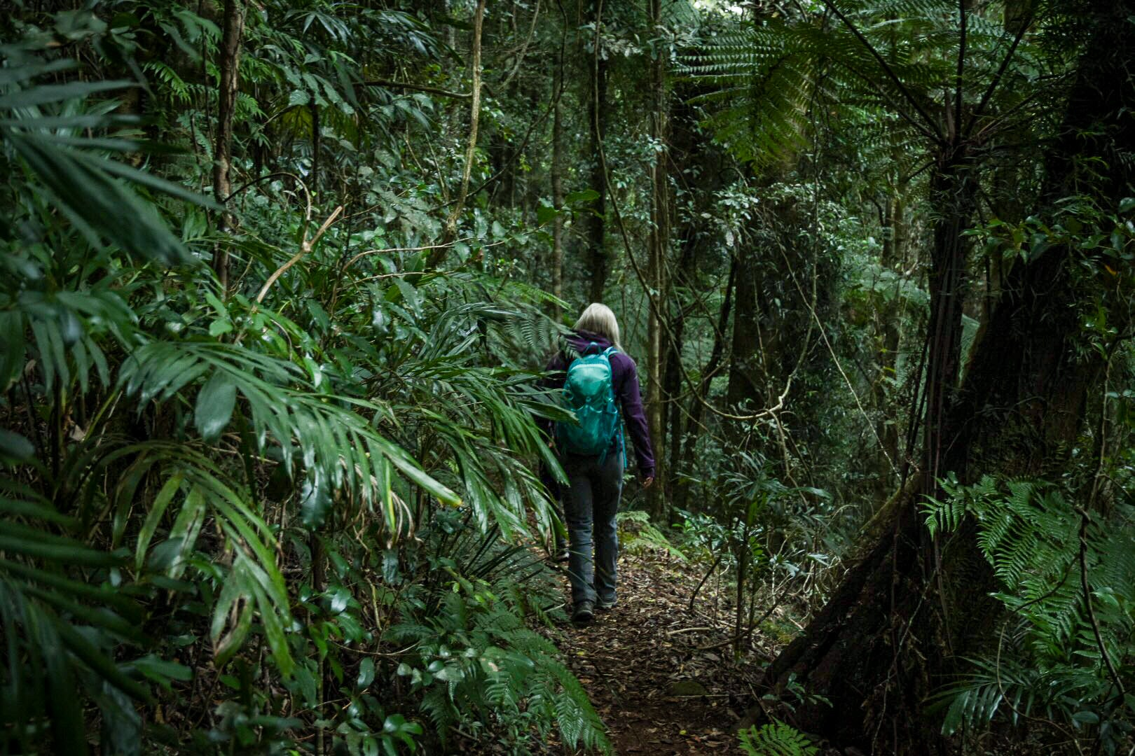 Girl walking past green leaves in the rainforest on a hiking track in the Gold Coast