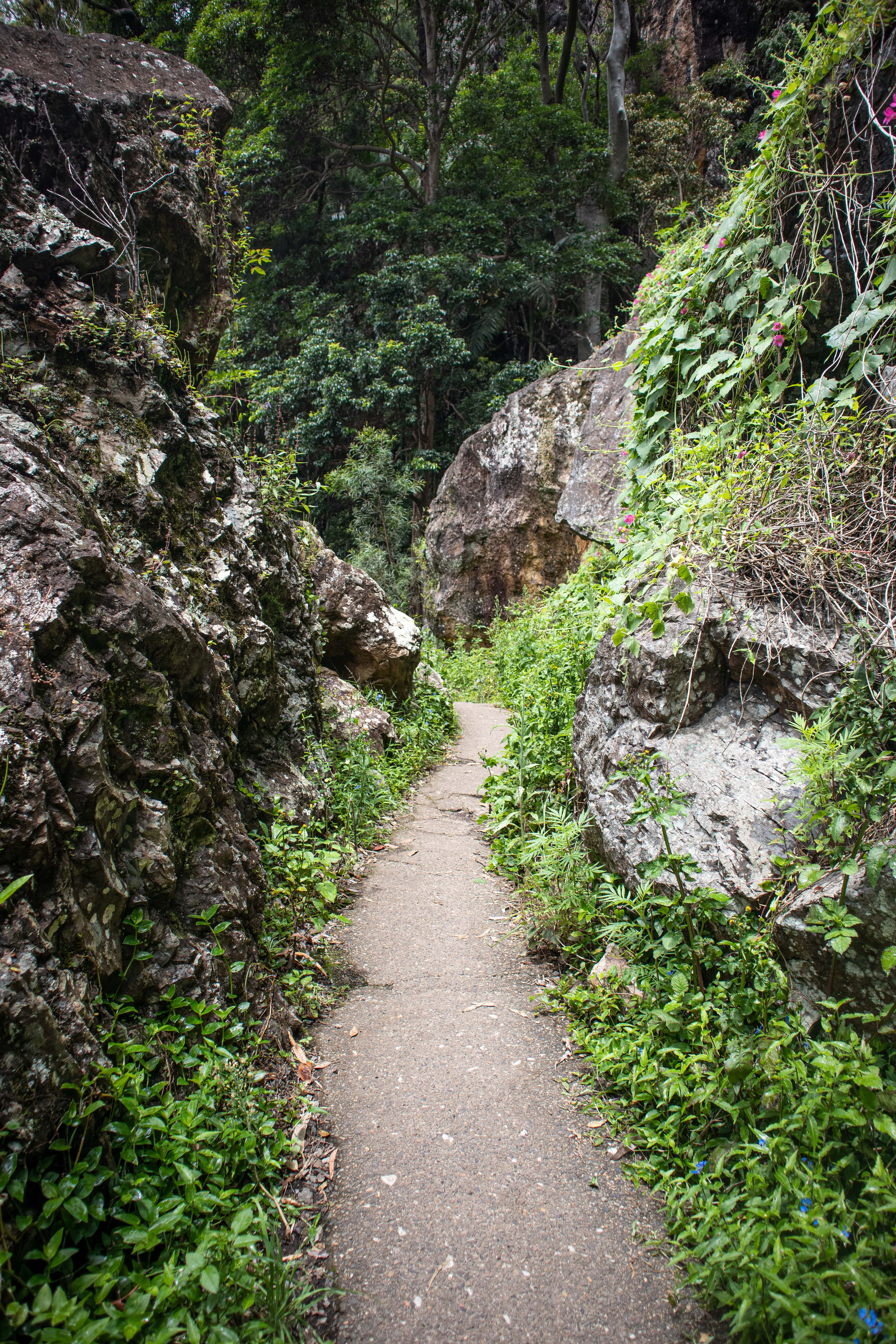 Winding concrete hiking path through rock formations in the rainforest