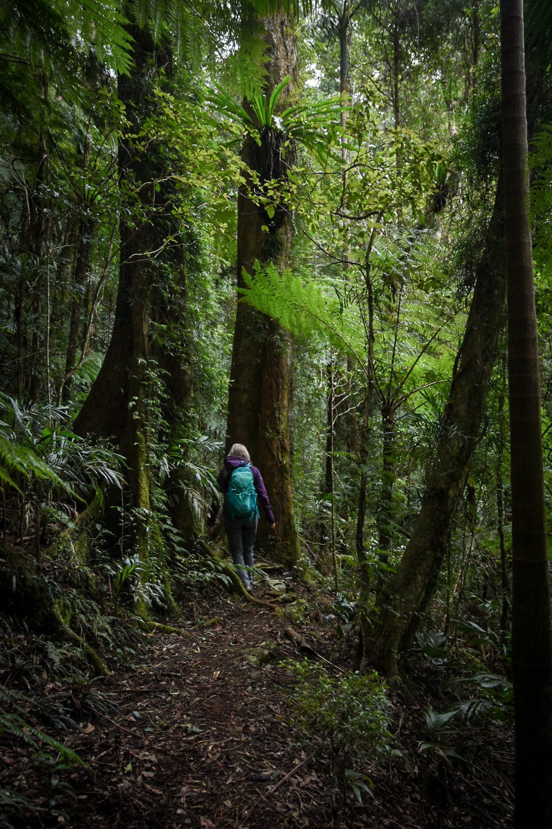 Girl hiking down a path in the rainforest in the Gold Coast Queensland