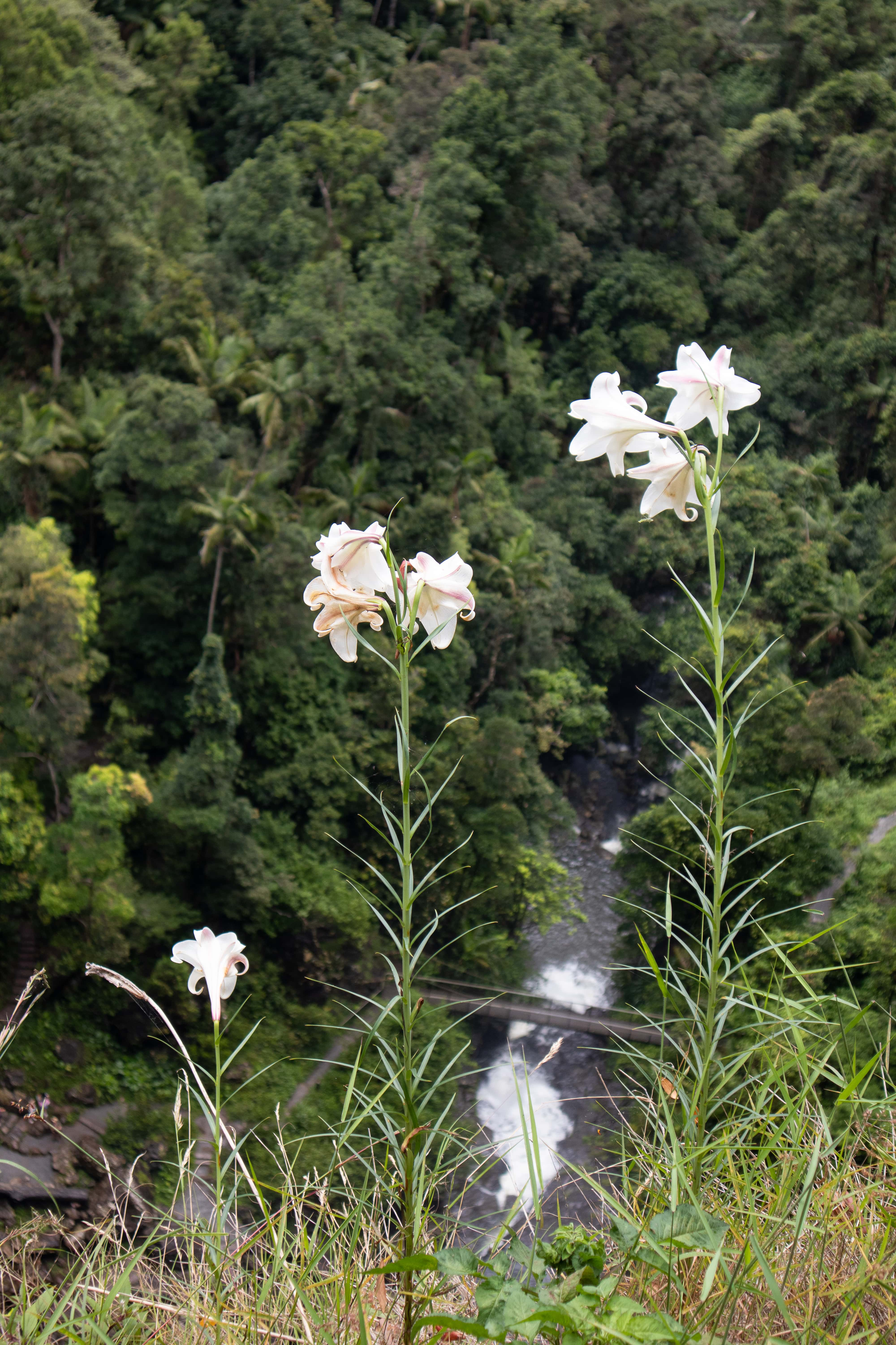 White flowers growing on the edge of a cliff with a river in the background below