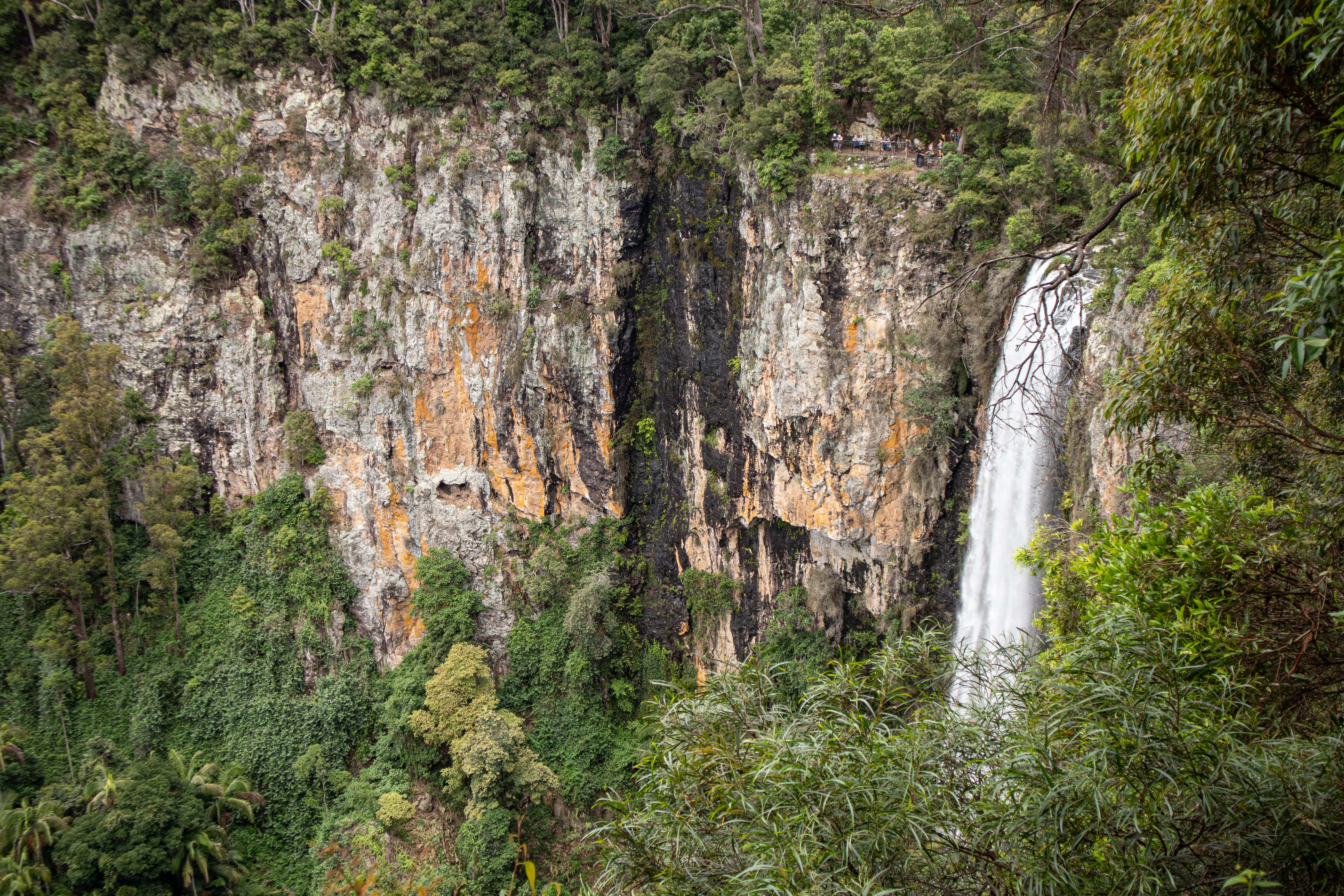 View of Purlingbrook Falls in Springbrook National Park from lookout