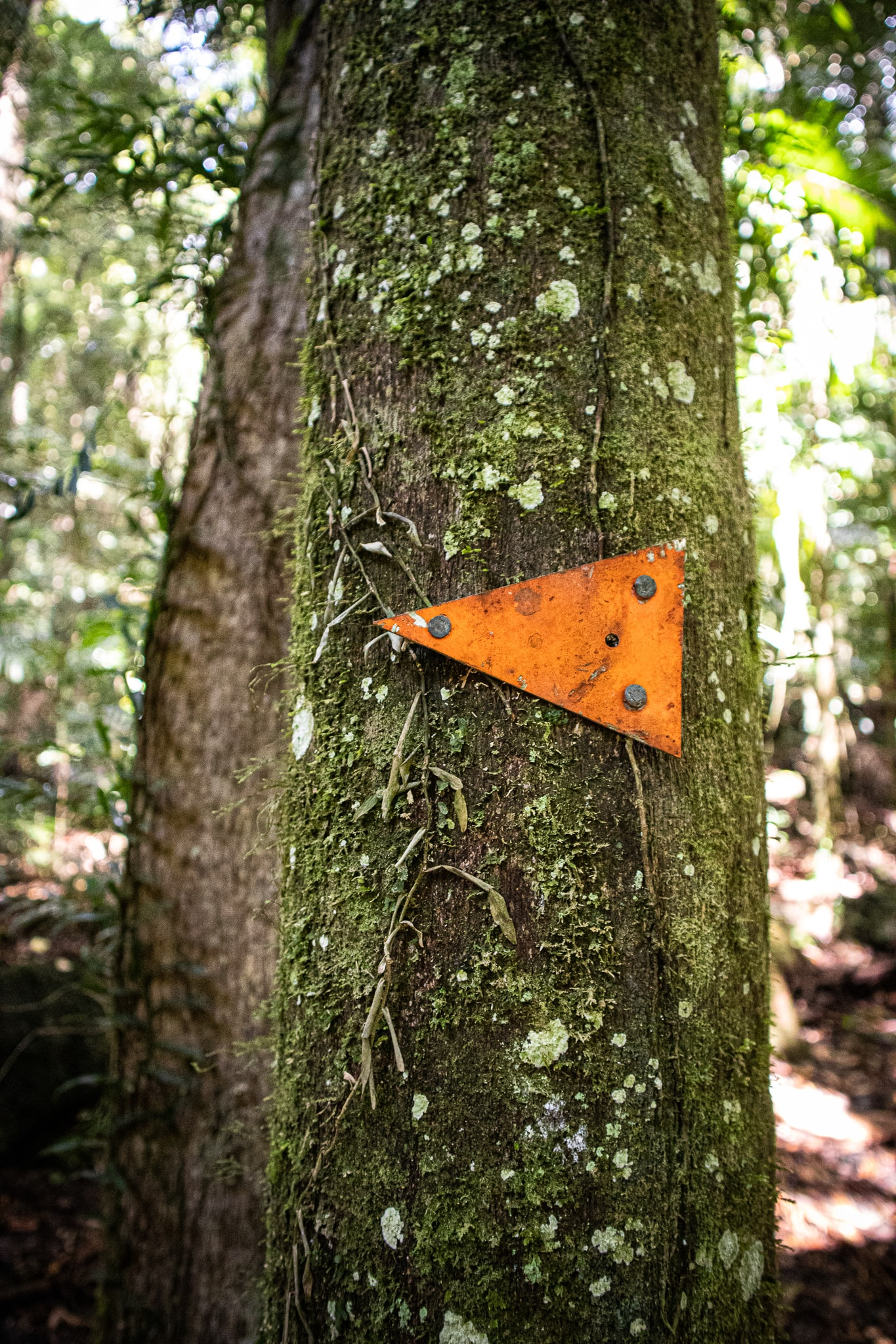 Orange arrow marker nailed to a tree in the rainforest indicating what direction to take for the hiking trail