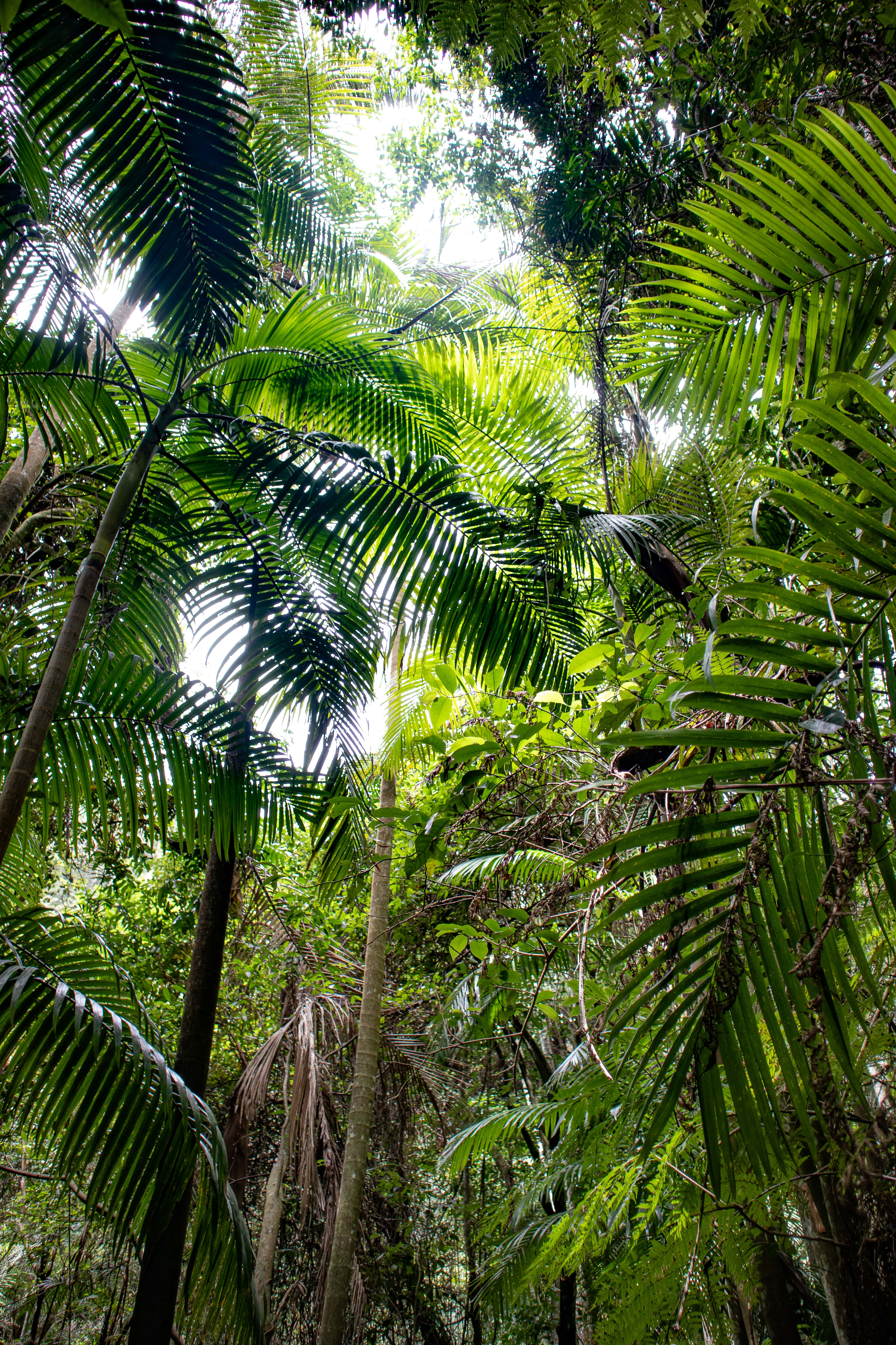 Green palm trees in rainforest